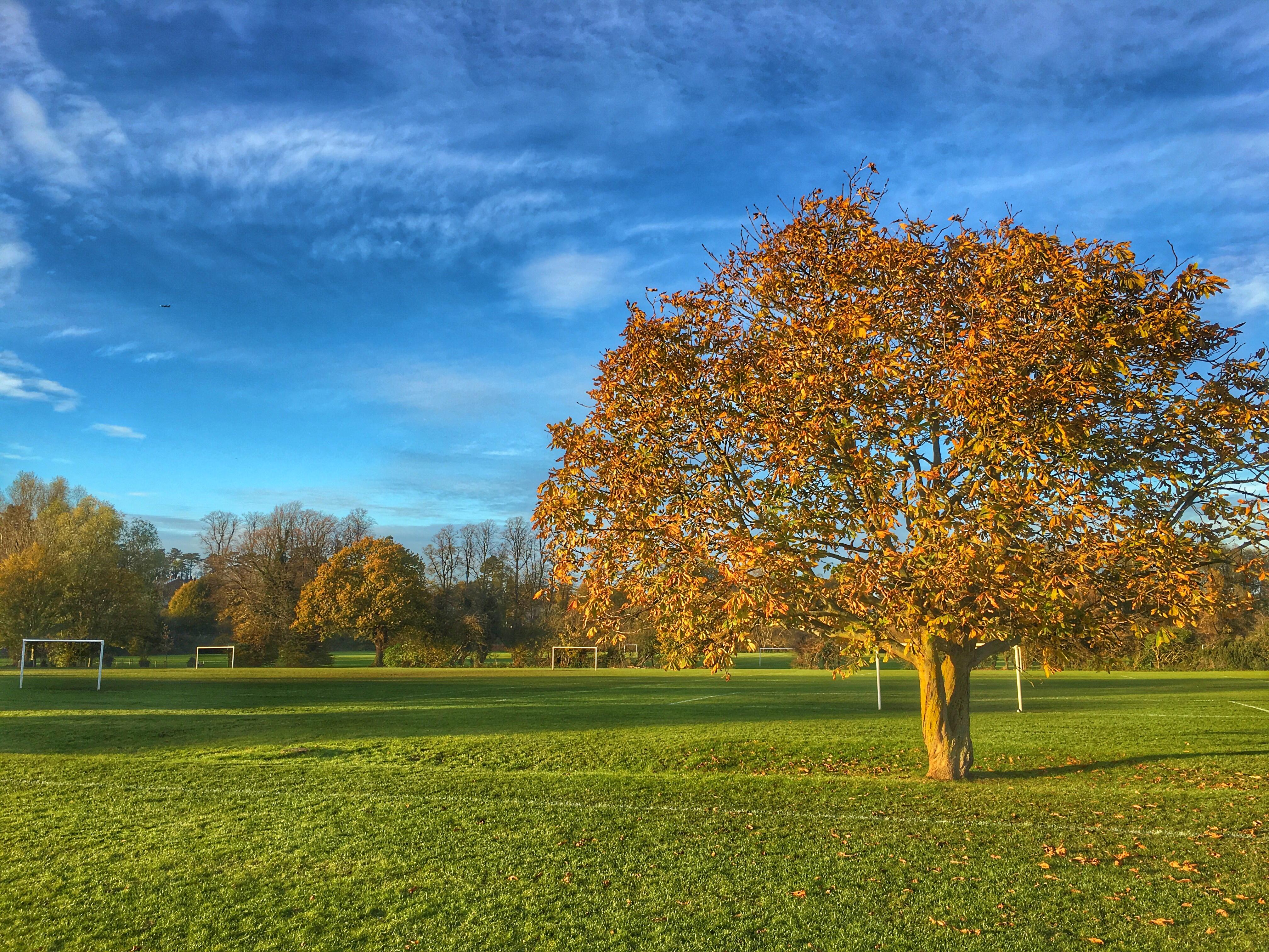 Grange paddocks blue skies